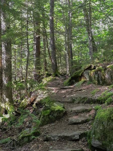 Photograph - Beech Mountain Trail Acadia National Park by NaturesPix