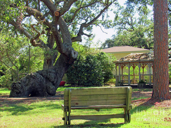 Photograph - Been Here Awhile Tree In Park by Roberta Byram