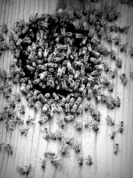 Digital Art - Bees by Robert Stanhope