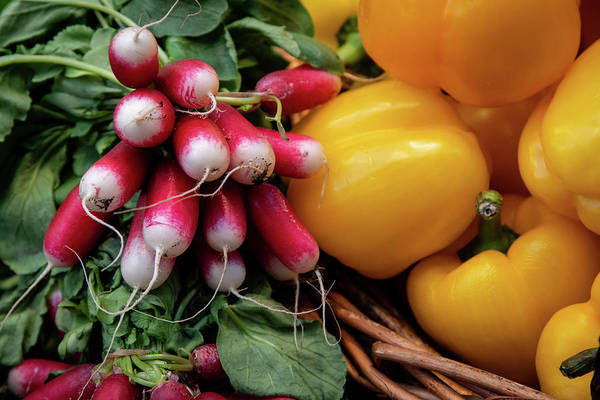 Wall Art - Photograph - Beet, Vegetable Full Of Nutrition For A Healthy Lifestyle by Michalakis Ppalis
