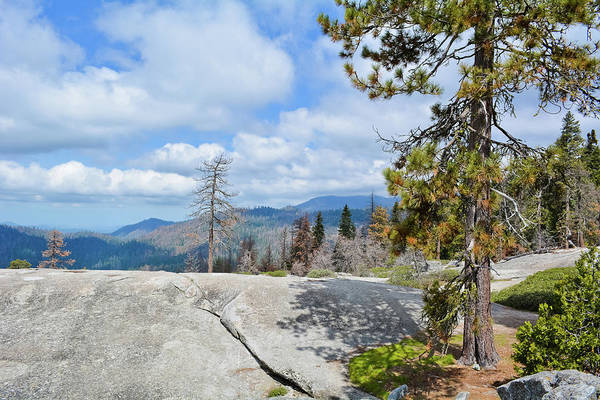 Photograph - Beetle Rock Sequoia by Kyle Hanson