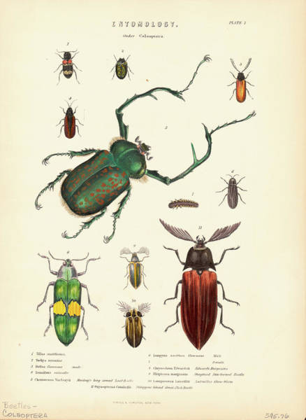Insect Photograph - Beetle Species by Kean Collection
