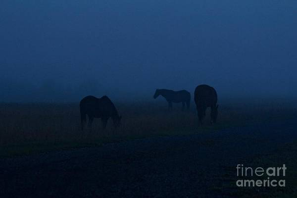 Photograph - Before Daylight by Ann E Robson