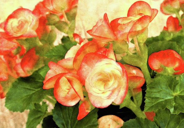 Mixed Media - Begonia Beguiled by Susan Maxwell Schmidt