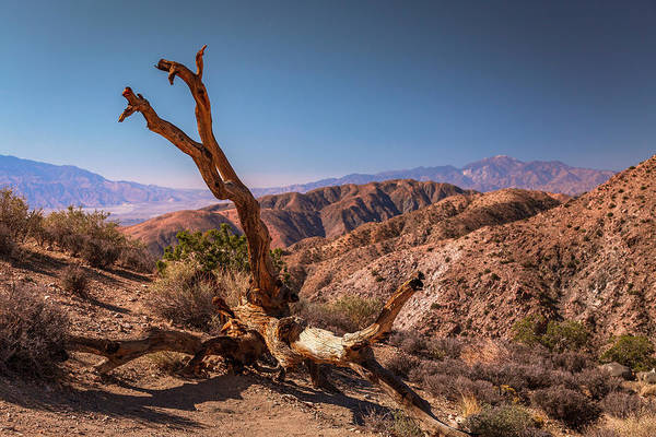 Photograph - Behold, A Dead Tree by ProPeak Photography
