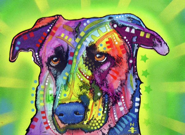 Wall Art - Painting - Belgian Malinois X by Dean Russo Art