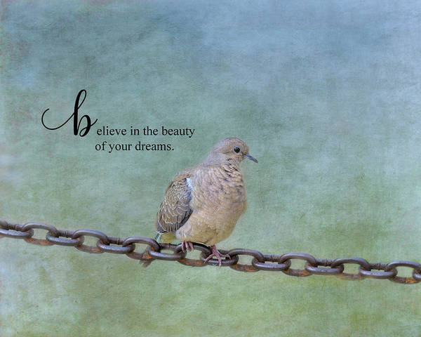 Wall Art - Photograph - Believe In The Beauty by Kim Hojnacki
