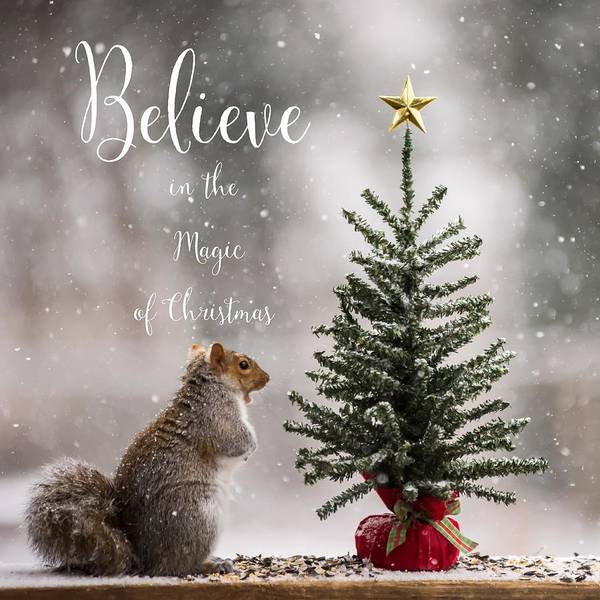 Photograph - Believe In The Magic Of Christmas Squirrel Square by Terry DeLuco