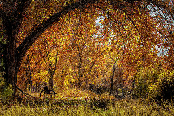 Bench With Autumn Leaves  Art Print