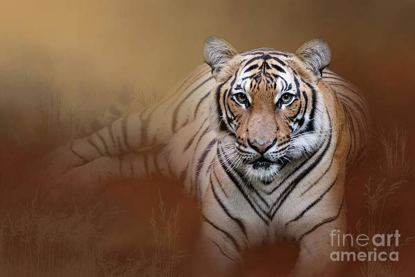 Photograph - Bengal Tiger by Ed Taylor