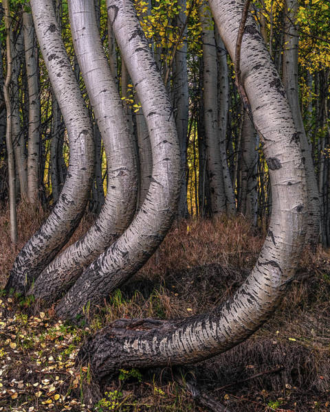 Photograph - Bent Out Of Shape by Chuck Jason