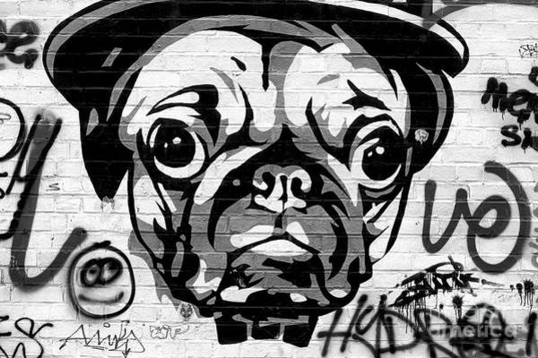 Wall Art - Photograph - Berlin Pug Life by John Rizzuto