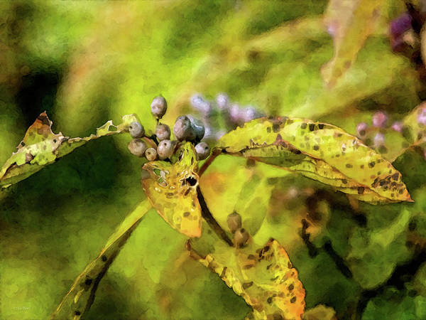Photograph - Berries And Aging Leaves 5709 Idp_2 by Steven Ward