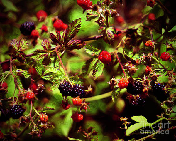 Wall Art - Photograph - Berry Picking  by Karen Beasley
