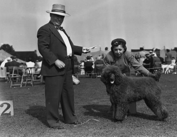 Poodle Photograph - Best Puppy by Bert Morgan
