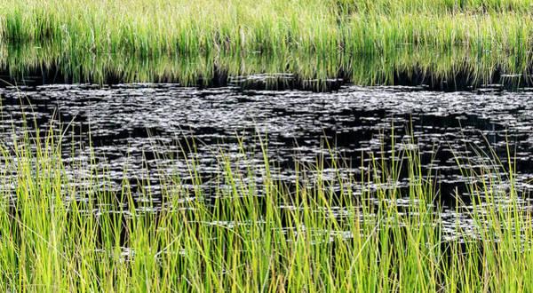 Photograph - Between The Grass by Silvia Marcoschamer