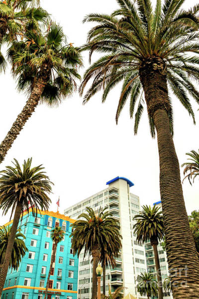 Between The Trees Photograph - Between The Palm Trees In Santa Monica by John Rizzuto