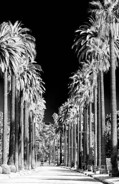 Photograph - Beverly Hills California by John Rizzuto