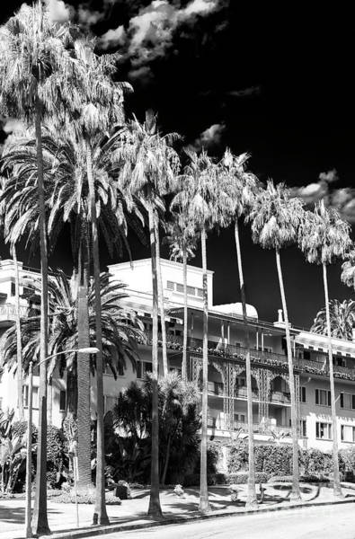 Photograph - Beverly Hills Hotel by John Rizzuto