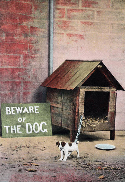 Canine Photograph - Beware Of Dog Sign With Small Dog by Brand X Pictures