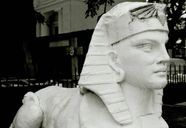 Photograph - Bewitching Sphinx by Shaun Higson