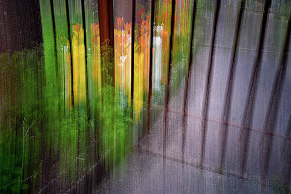 Photograph - Beyond The Gate by Michael Hubley