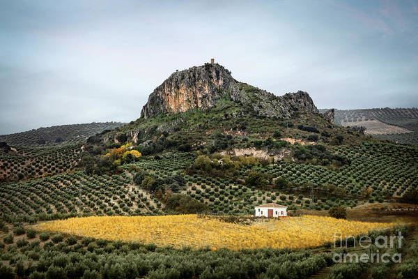 Wall Art - Photograph - Beyond The Olive Tree Hills by Evelina Kremsdorf