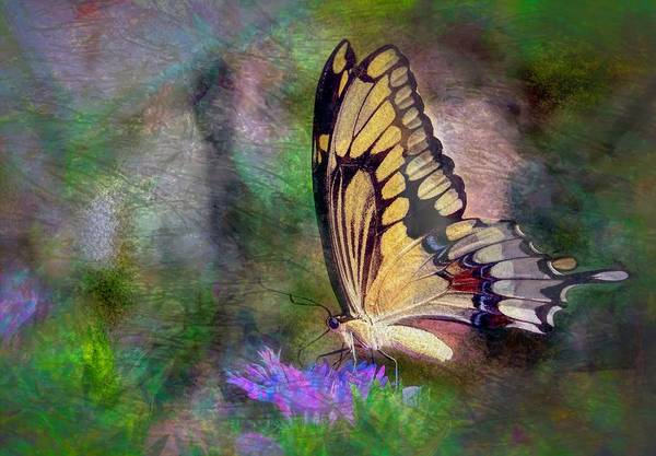 Wall Art - Photograph - B'fly by Ches Black