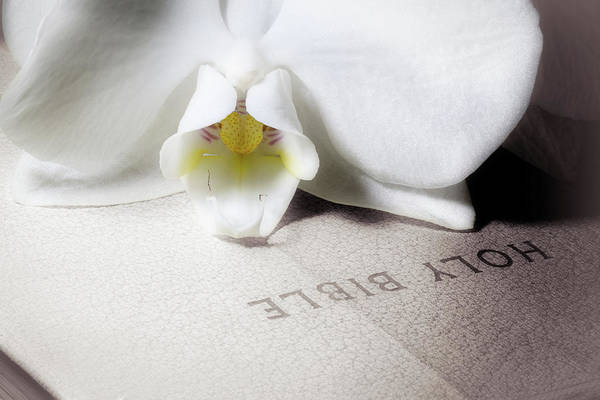 Bible Wall Art - Photograph - Bible With White Orchid by Tom Mc Nemar