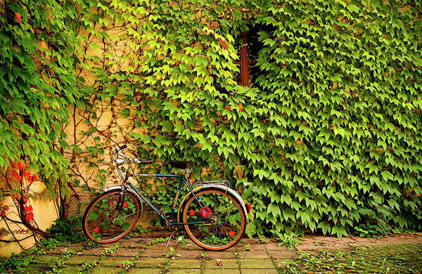 Photograph - Bicycle By Ivy On A Building by David H. Collier