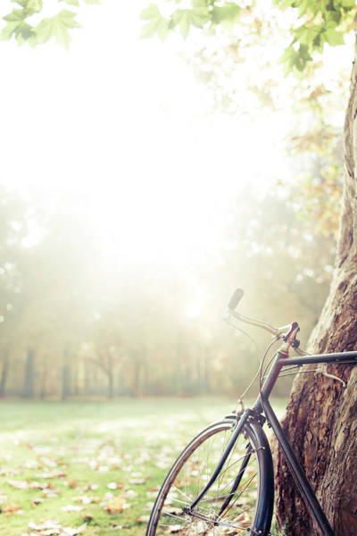 Stationary Photograph - Bicycle Leaned On Big Tree In Sunlight by Guido Mieth