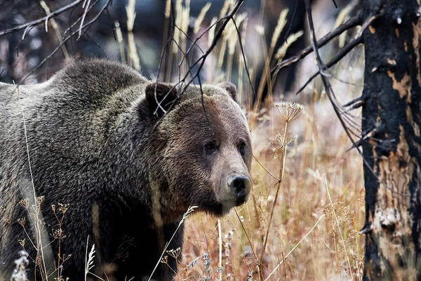 Wall Art - Photograph - Big Bear by Paul Freidlund