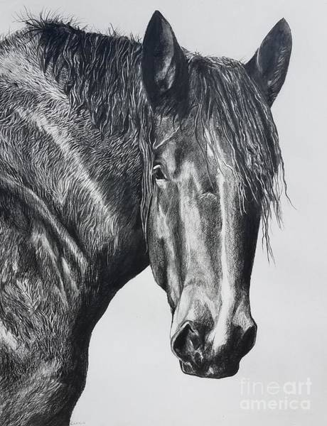 Drawing - Big Boy by Kathy Laughlin