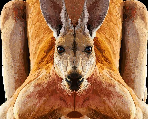 Drawing - Big Boy Red Kangaroo   by Joan Stratton
