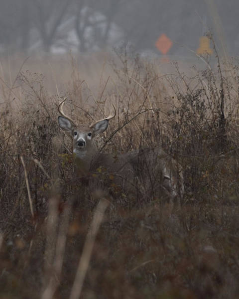 Photograph - Big Buck by Paul Ross