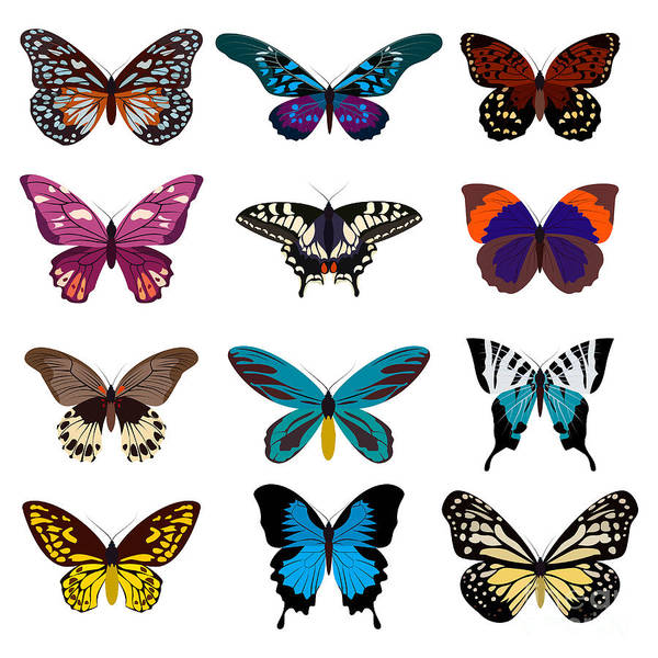Object Wall Art - Digital Art - Big Collection Butterfly Of Colorful by Svstudio
