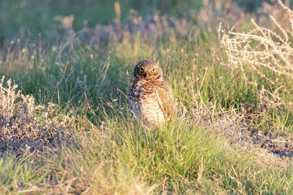 Photograph - Big Eyed Burrowing Owl by Tony Hake