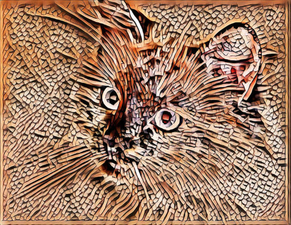 Digital Art - Big Eyed Kitty by Don Northup