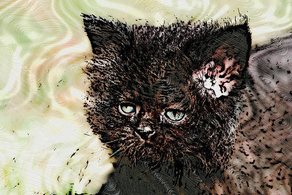 Digital Art - Big Face Kitty by Don Northup