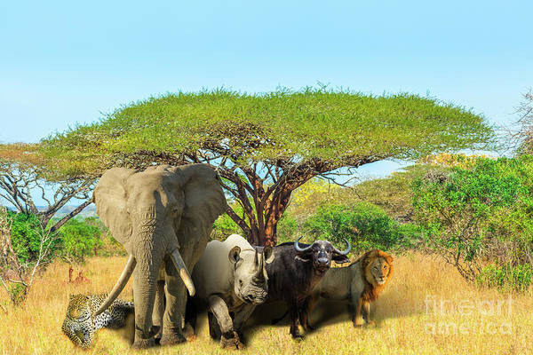 Photograph - Big Five Scene by Benny Marty