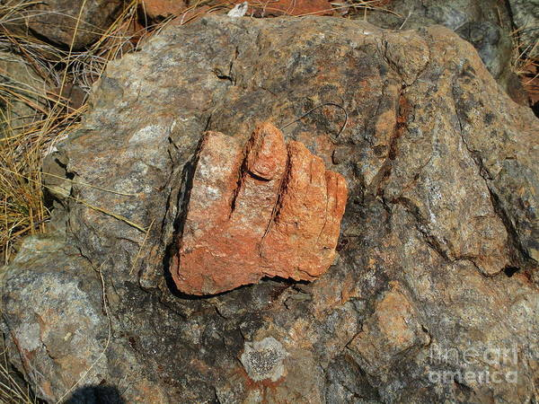 Photograph - Big Foot's Foot by Marie Neder