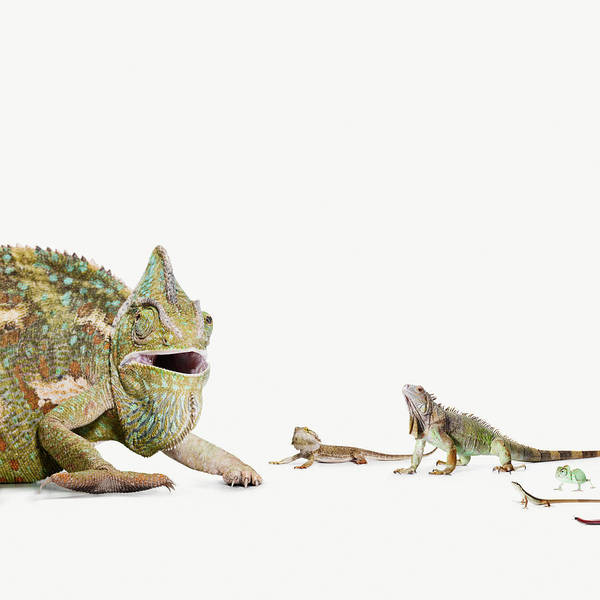Green Iguana Wall Art - Photograph - Big Lizard Speaking To Group Of Smaller by Maarten Wouters