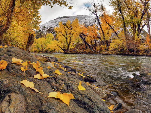 Photograph - Big Lost Autumn Color by Leland D Howard