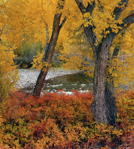 Photograph - Big Lost Autumn by Leland D Howard