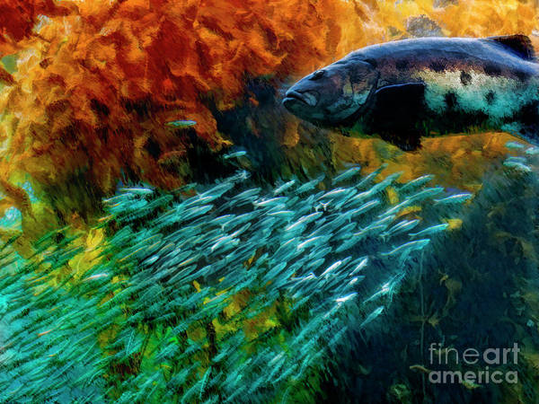Photograph - Big Sea Bass And Anchovies by Blake Richards
