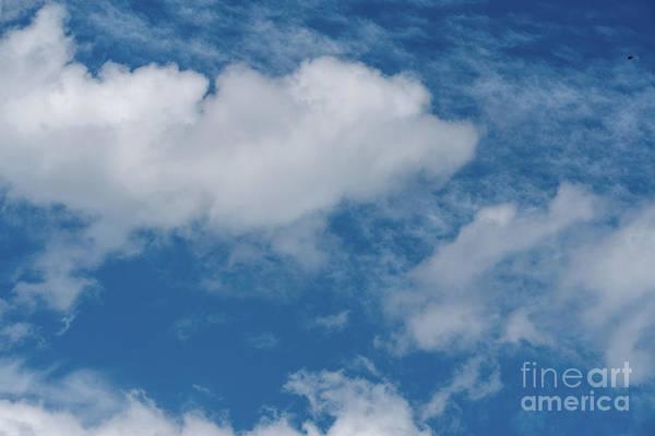Photograph - Big Sky, Little Bird by Matthew Nelson