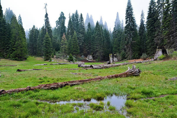 Photograph - Big Stump Trail Kings Canyon by Kyle Hanson