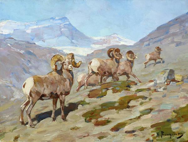 Wall Art - Painting - Bighorn Sheep, Nigel Pass, Alberta, 1919 by Carl Rungius