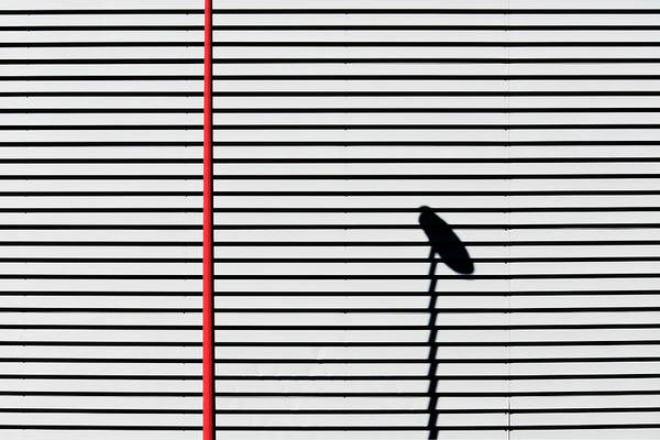 Photograph - Bilbao Shadow by Stuart Allen