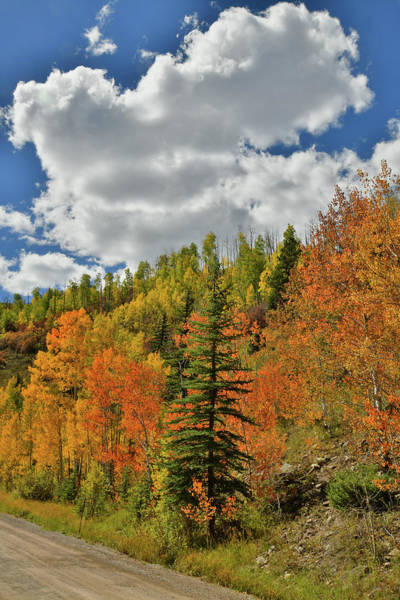 Photograph - Billowing Clouds Over Wilson Mesa Fall Colors by Ray Mathis